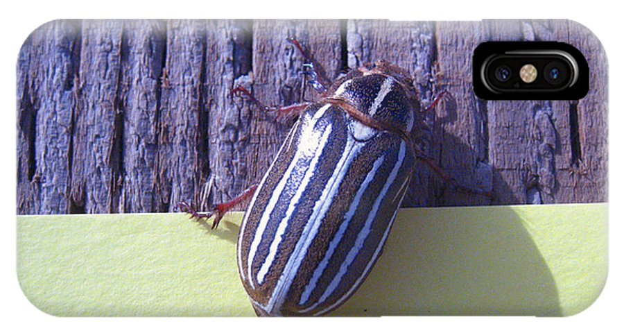 Striped Bug IPhone X Case featuring the photograph Bug Lands On My Paper by Kym Backland