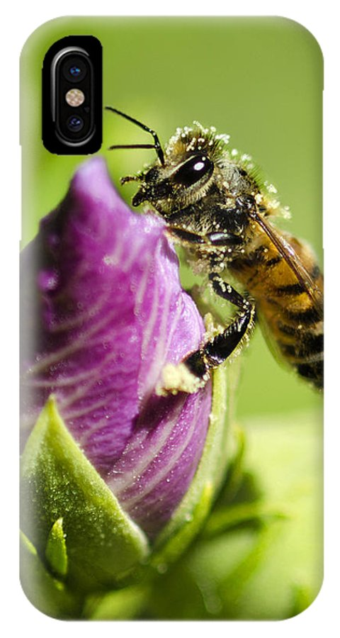 Bee IPhone X Case featuring the photograph Busy Bee 2 by Dianne Phelps