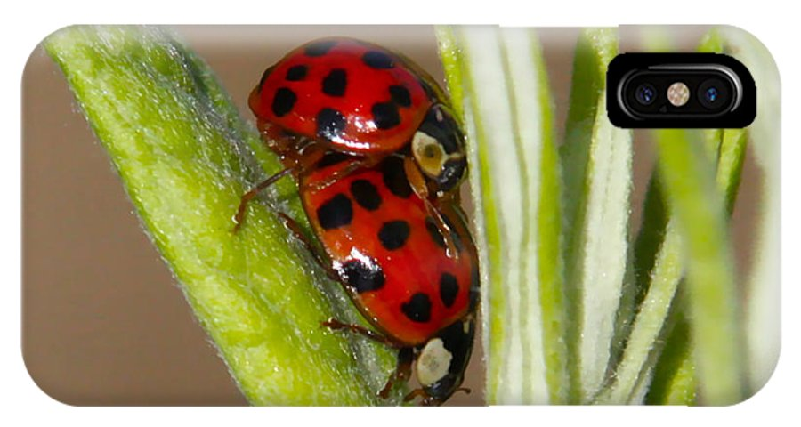Ladybug Prints IPhone X / XS Case featuring the photograph Busy Bugs by Paul Marto