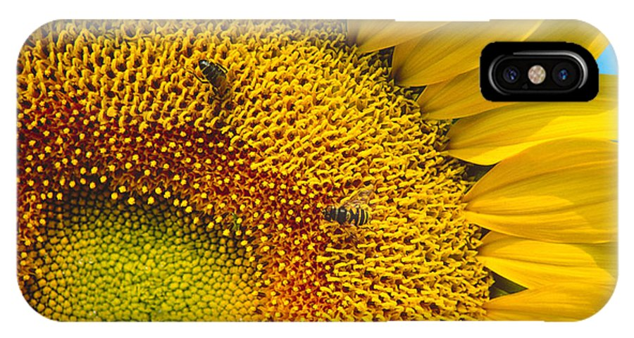 Sunflower IPhone X Case featuring the photograph Busy Sunflower by Bernard Lynch