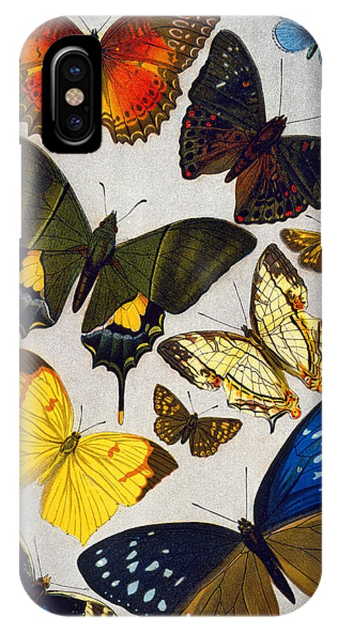 19th Century IPhone X Case featuring the photograph Butterflies, 19th Century by Granger