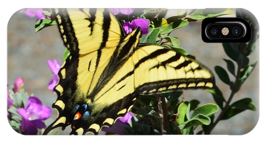 Yellow And Black Butterfly IPhone X Case featuring the photograph Butterfly 2 by Afroditi Katsikis