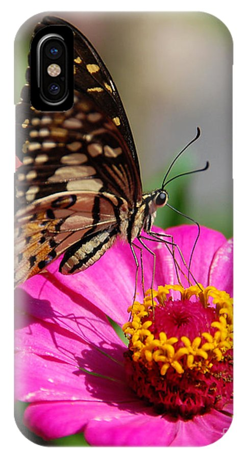 IPhone X Case featuring the photograph Butterfly 2 by Charuhas Images