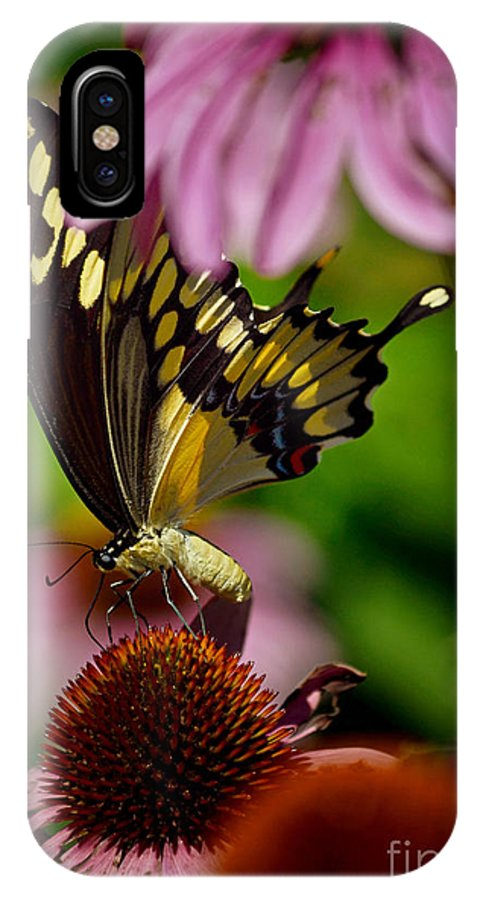 Color Photography IPhone X Case featuring the photograph Butterfly Heaven by Sue Stefanowicz