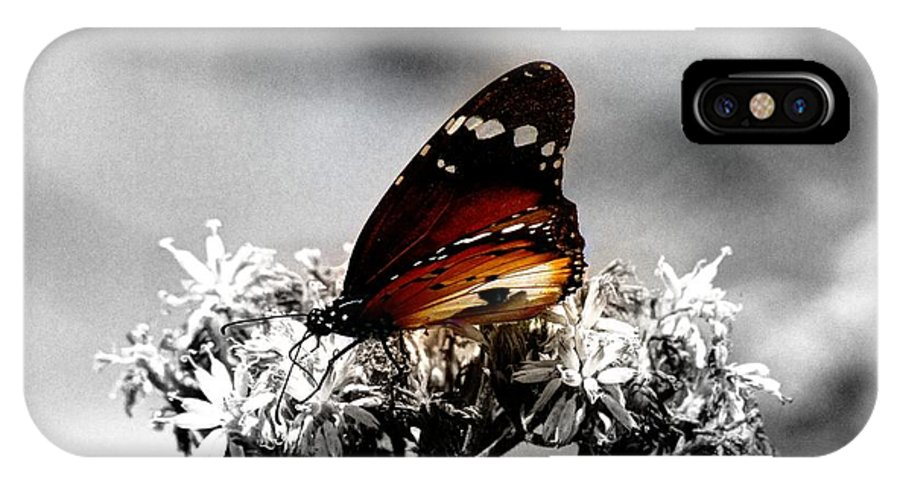 Butterfly IPhone X Case featuring the photograph Butterfly In Color by David Morefield