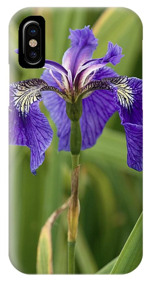 Butterfly Iris IPhone X Case featuring the photograph Butterfly Iris (iris Spuria) by Bob Gibbons