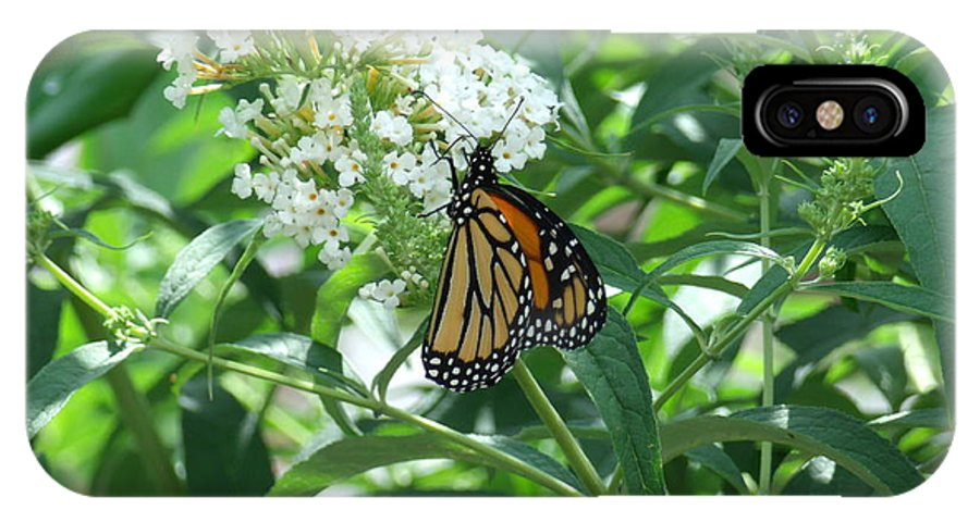 Monarch Butterfly IPhone X Case featuring the photograph Butterfly On The Butterfly Bush by Terrilee Walton-Smith