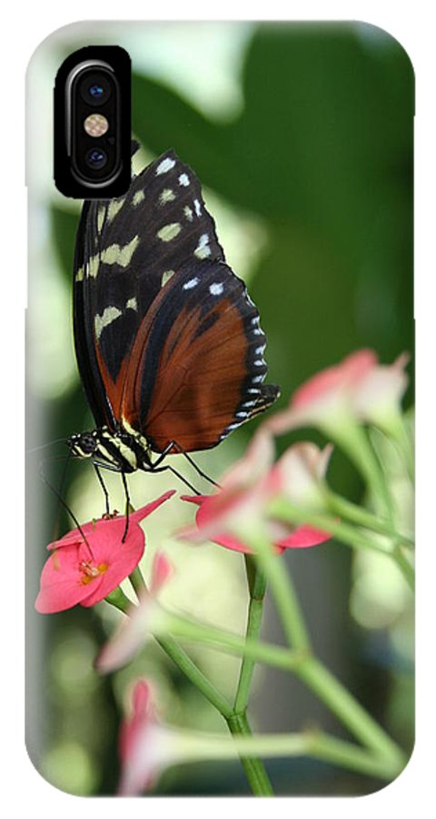 Butterfly IPhone X Case featuring the photograph Butterfly Perch by Donna Gibson