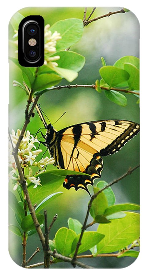 Butterflies IPhone X Case featuring the photograph Butterfly Tiger Swallow by Peggy Franz