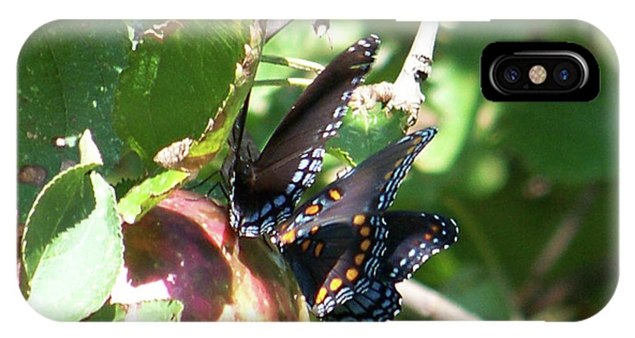 Butterfly IPhone X Case featuring the photograph Butterfly4 by Martha Abell