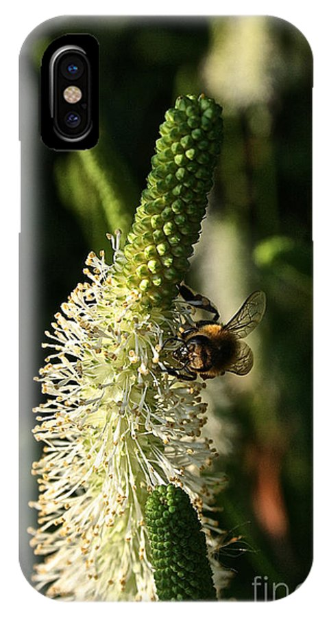 Outdoors IPhone X Case featuring the photograph Buzz Buzz by Susan Herber