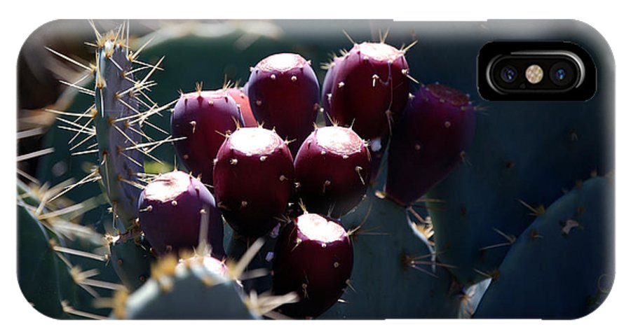 Kelly Rader IPhone X / XS Case featuring the photograph Cactus Bud by Kelly Rader