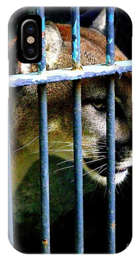 Mountain Lion IPhone X Case featuring the photograph Caged Beauty by Shawna Gibson