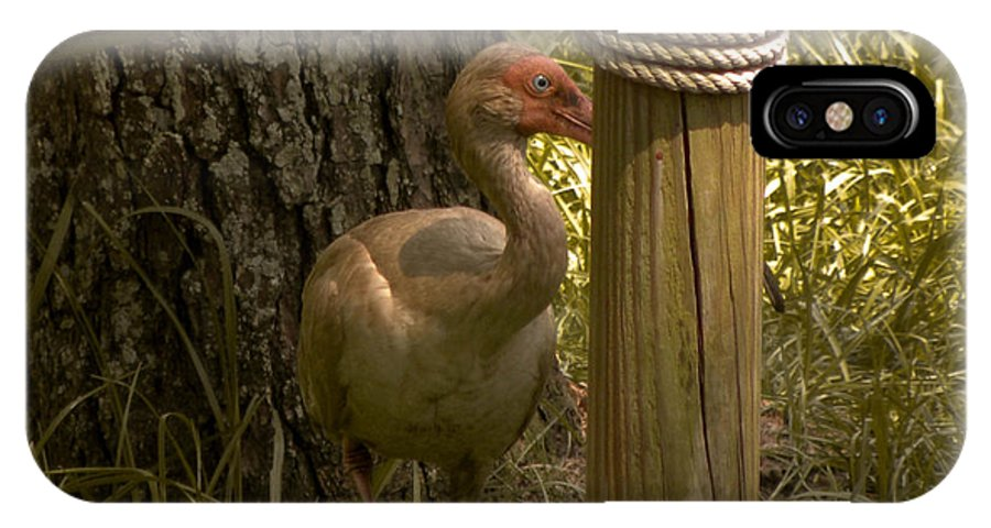 Bird IPhone X Case featuring the photograph Cagney by Trish Tritz