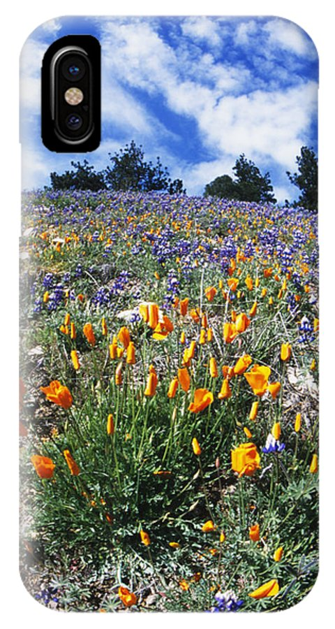 Usa IPhone X Case featuring the photograph California Poppies And Lupins On A Hill by James Forte