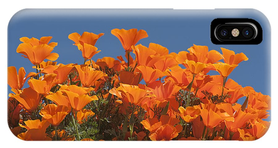 Sandra Bronstein IPhone X Case featuring the photograph California Poppies by Sandra Bronstein