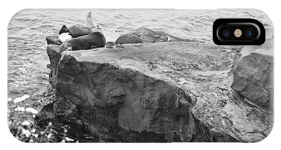 Black And White IPhone X / XS Case featuring the photograph California Sea Lions Black And White La Jolla Shores San Diego by Sherry Curry