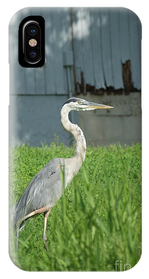 Avian.nature IPhone X Case featuring the photograph Calm Cool Collected by Jack Norton