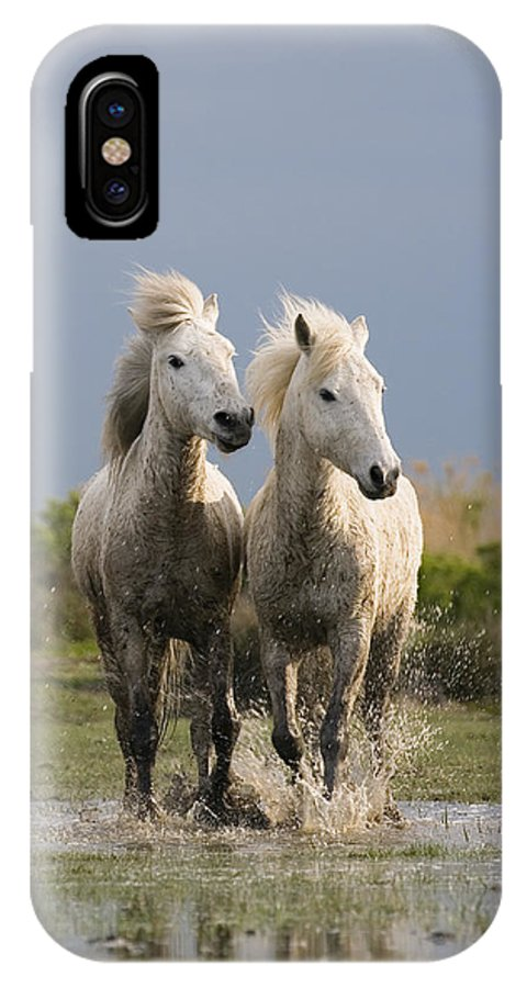 Mp IPhone X Case featuring the photograph Camargue Horse Equus Caballus Pair by Konrad Wothe