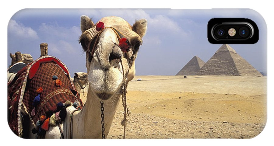 Animal Head IPhone X Case featuring the photograph Camel In Giza Egypt by Axiom Photographic