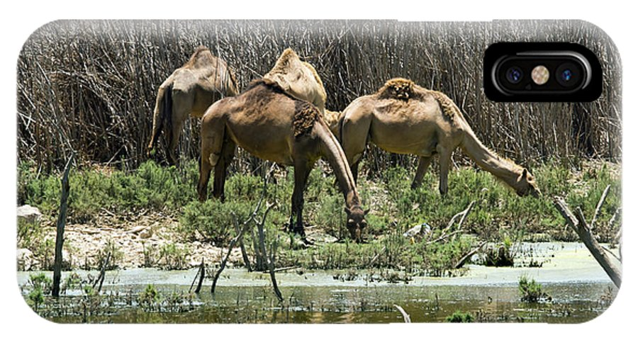 Camels IPhone X Case featuring the photograph Camels At The Water by Arik Baltinester