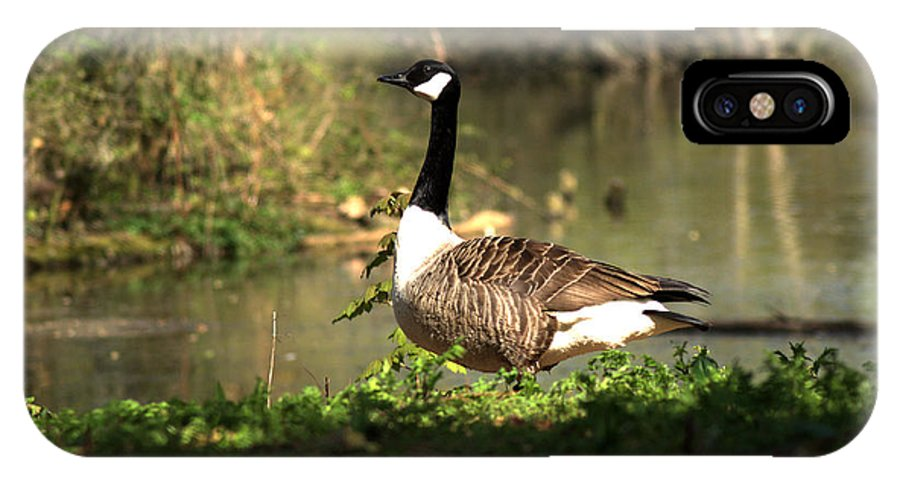 Canada Goose IPhone X Case featuring the photograph Canada Goose by Chris Day