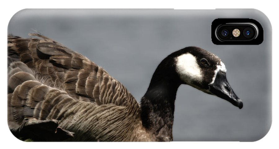 Bird IPhone X Case featuring the photograph Canadian Goose by Donna Greene