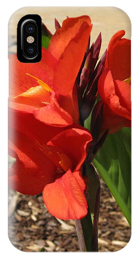 Canna Lilly IPhone X Case featuring the photograph Cannas by Megan Cohen