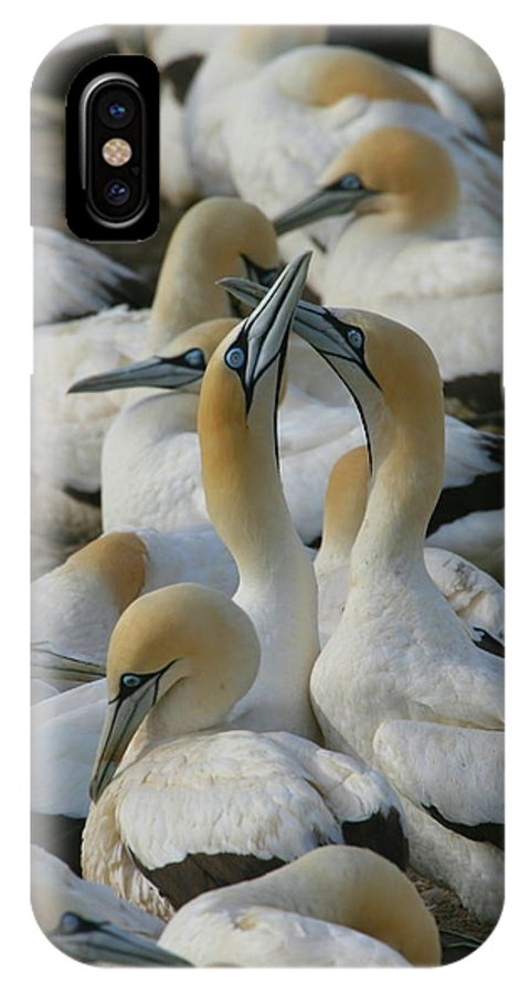 Gannet IPhone X Case featuring the photograph Cape Gannets by Bruce J Robinson