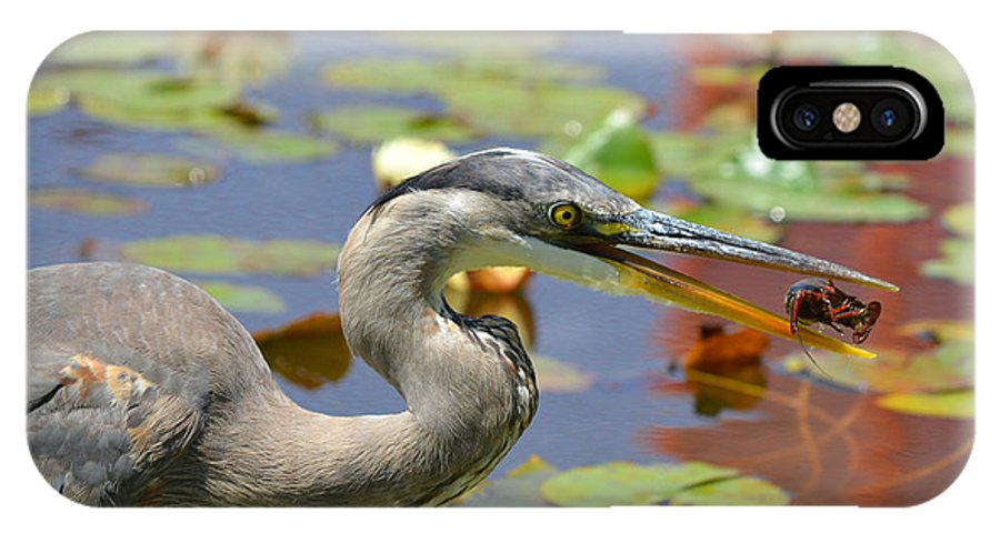 Great Blue Heron IPhone X Case featuring the photograph Captive Crayfish by Fraida Gutovich