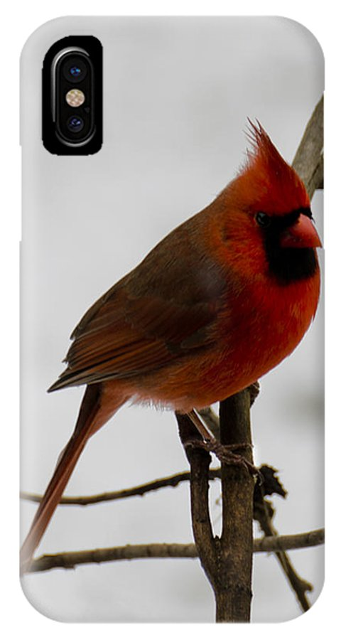 Usa IPhone X Case featuring the photograph Cardinal In The Snow by LeeAnn McLaneGoetz McLaneGoetzStudioLLCcom