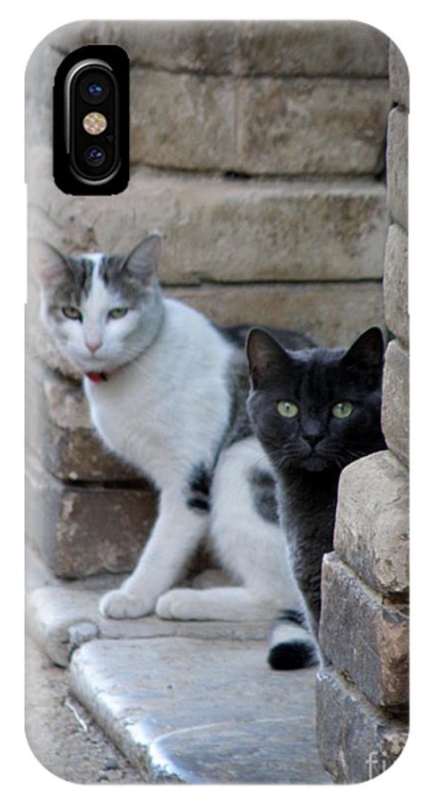 Cats IPhone X Case featuring the photograph Cat Guardians by Lainie Wrightson