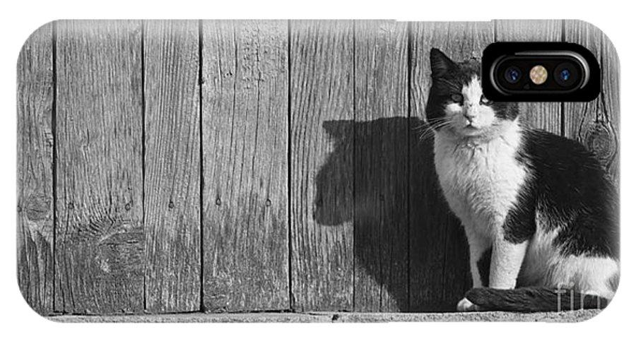 Cat IPhone X / XS Case featuring the photograph Cat Portrait by Gabriela Insuratelu