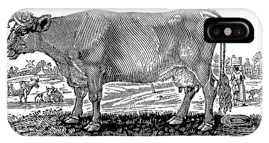 1790 IPhone X Case featuring the photograph Cattle by Granger