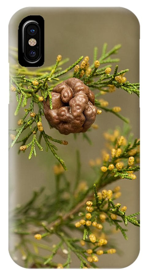 Gymnosporangium Juniperi-virginianae IPhone X Case featuring the photograph Cedar Rust Gall - Gymnosporangium Juniperi-virginianae by Kathy Clark