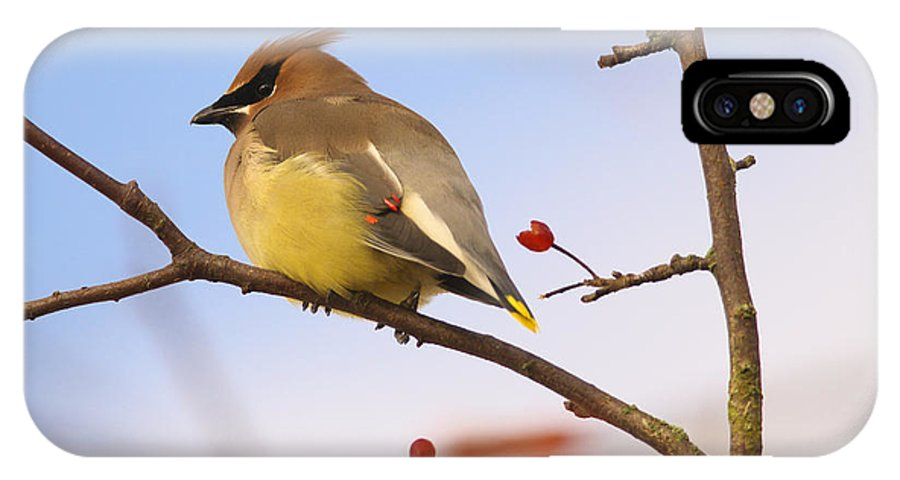 Cedar Waxwing IPhone X Case featuring the photograph Cedar Waxwing by Sharon Talson