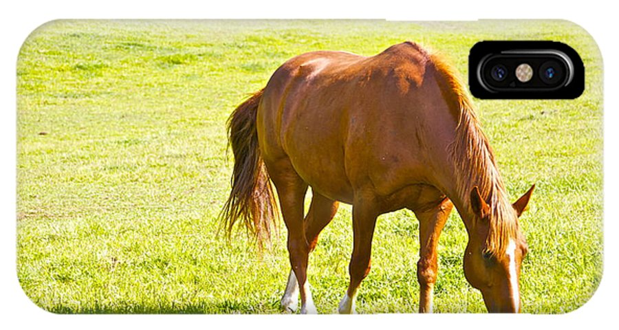 Horse Chestnut Grazing Pasture Farm Grass Scenic IPhone X Case featuring the photograph Chestnut Grazing by Alice Gipson