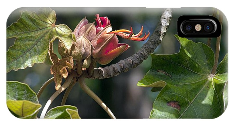 Mexican Hand Tree IPhone X / XS Case featuring the photograph Chiranthodendron Pentadactylon by Bob Gibbons