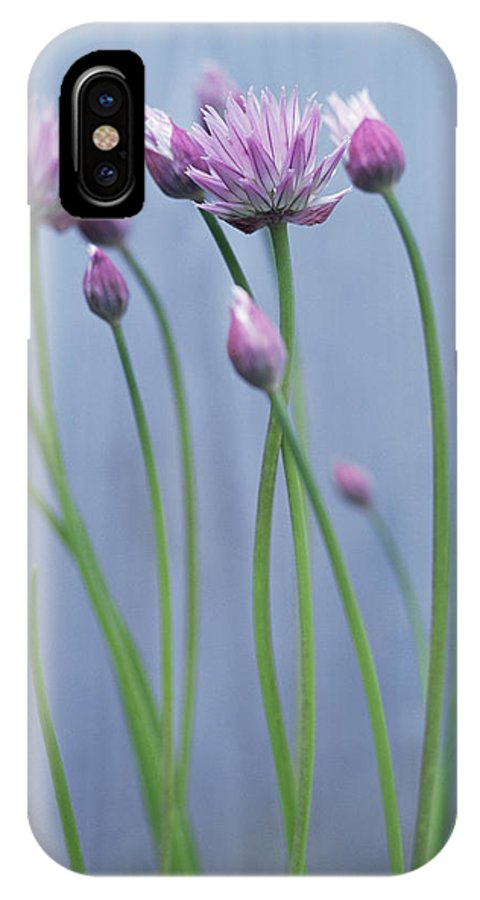 Chive IPhone X Case featuring the photograph Chives (allium Schoenoprasum) by Maxine Adcock