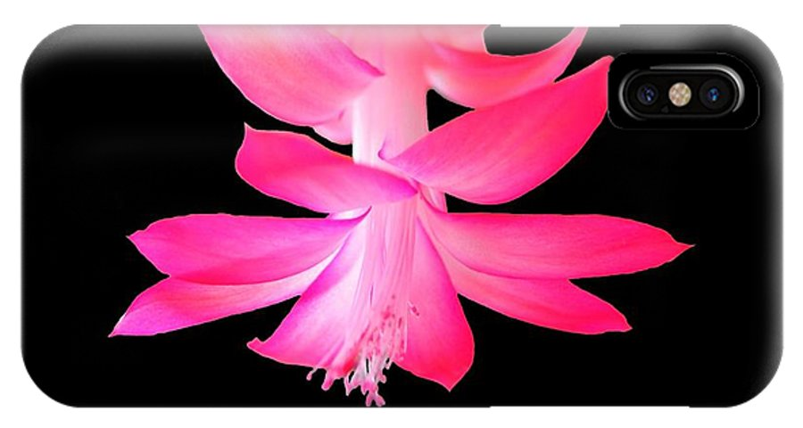Flower IPhone X Case featuring the photograph Christmas Cactus by Steven Clipperton