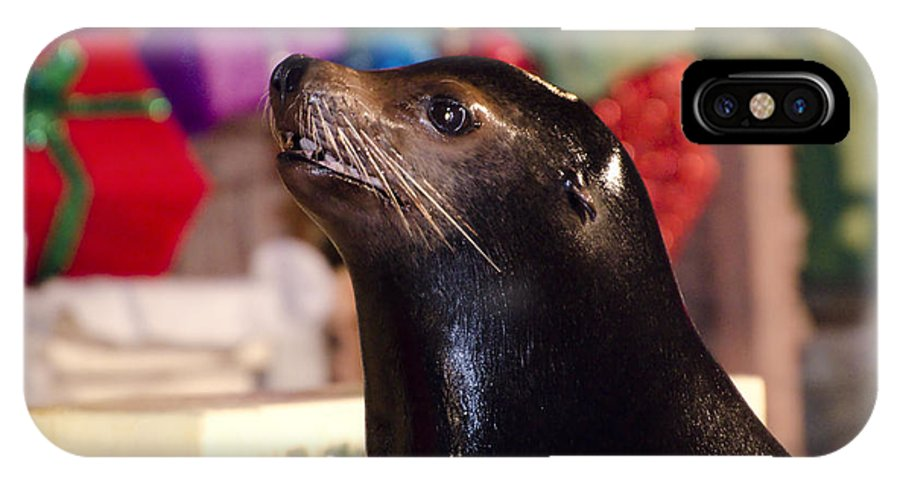 Sea Lion IPhone X Case featuring the photograph Christmas Sea Lion by Jim And Emily Bush