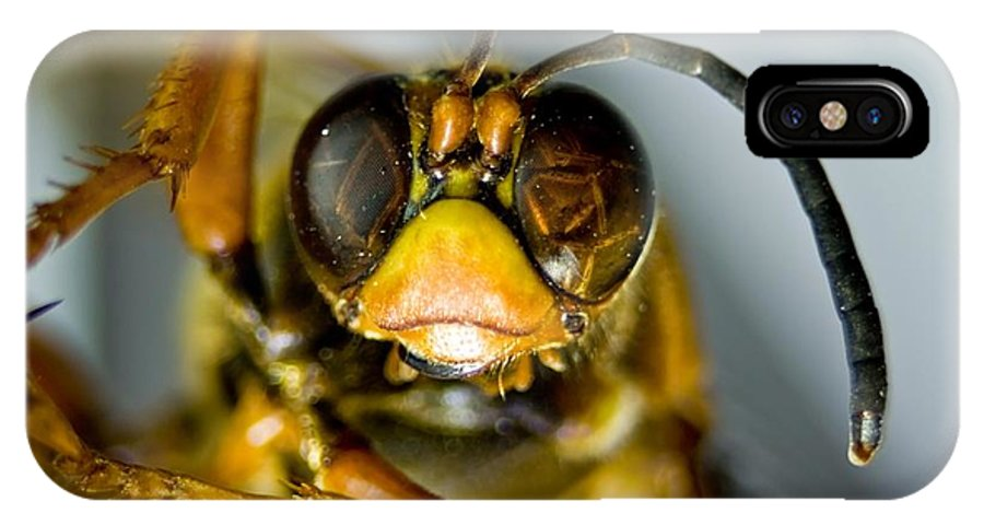 Hymenoptera IPhone X Case featuring the photograph Cicada Killer by Beth Phifer