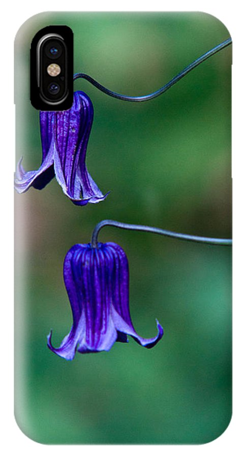 Clematis IPhone X / XS Case featuring the photograph Clematis Integrifolia Rooguchi 2 by Douglas Barnett