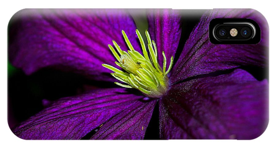 Flower IPhone X Case featuring the photograph Clematis Macro by Toma Caul