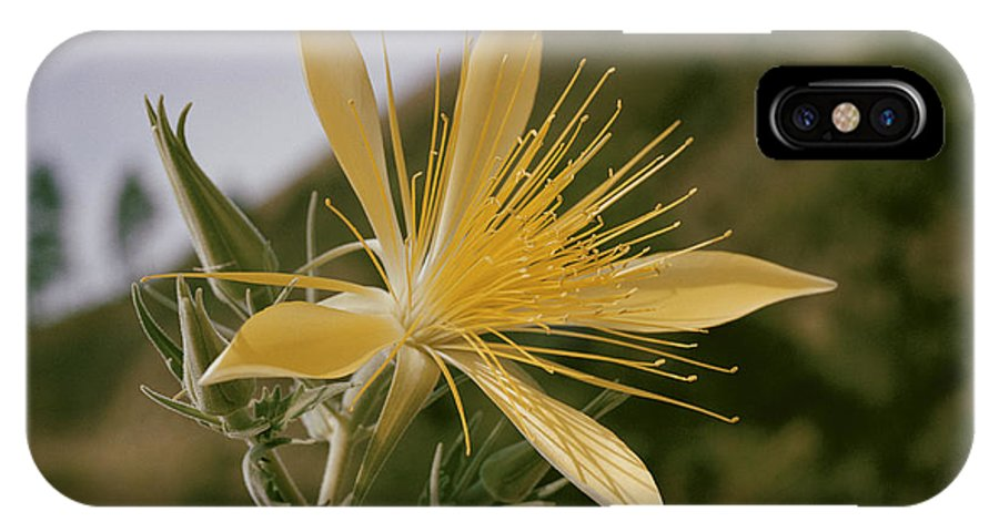 nez Perce National Forest IPhone X / XS Case featuring the photograph Close-up View Of A Blazing Star by B. Anthony Stewart