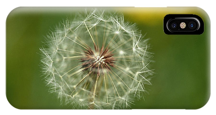 Plants IPhone X / XS Case featuring the photograph Close View Of A Dandelion Gone To Seed by Nicole Duplaix