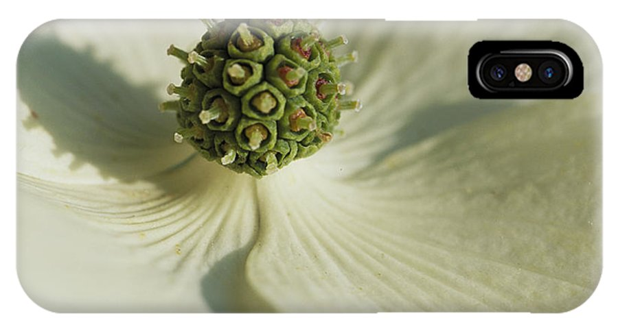North America IPhone X / XS Case featuring the photograph Close View Of A Dogwood Blossom by Darlyne A. Murawski