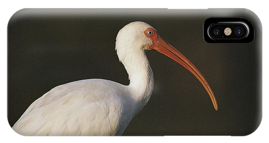 Animals IPhone X / XS Case featuring the photograph Close View Of A White Ibis by Joel Sartore