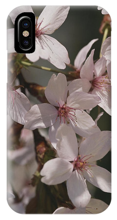 Subject IPhone X / XS Case featuring the photograph Close View Of Cherry Blossoms by Darlyne A. Murawski