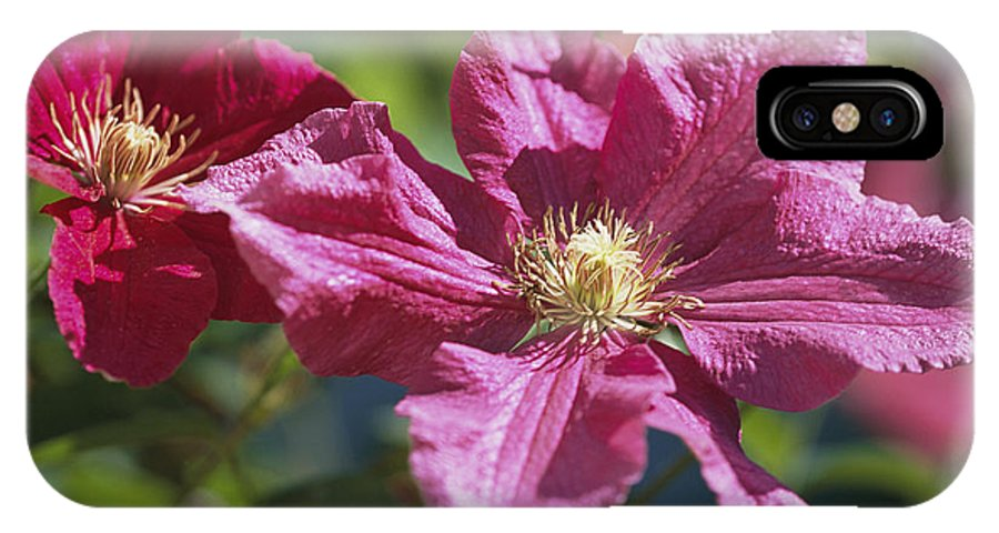 Plants IPhone X / XS Case featuring the photograph Close View Of Clematis Flowers by Darlyne A. Murawski